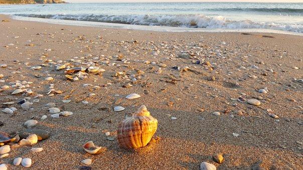 Shell, Beach, Turkey, Sea, Sunrise, Summer, Holidays