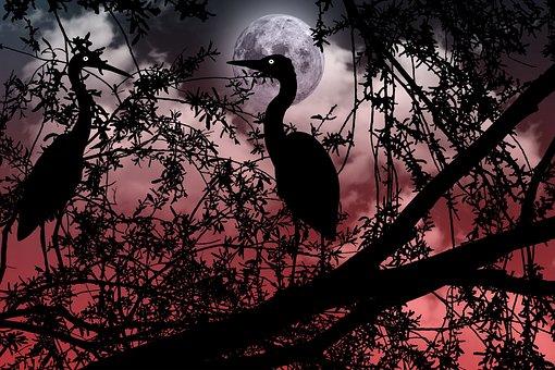 Ave, Birds, Silhouette, Night, Dark, Animals, Flight