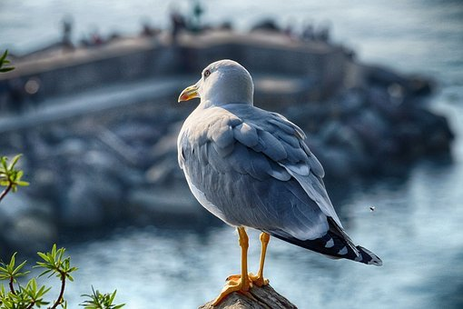 Seagull, Sea, Camogli, Genoa, Bird, Nature, Sky, Water
