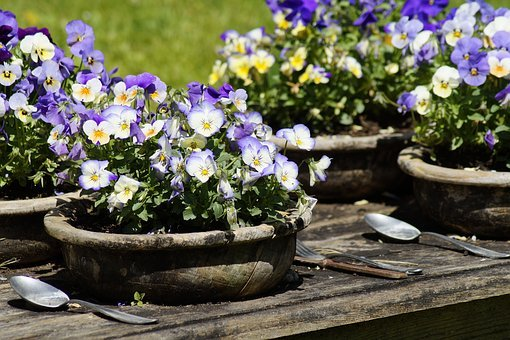 Table, Nature, Flowers, Pansy, Eat, Gedeckter Table