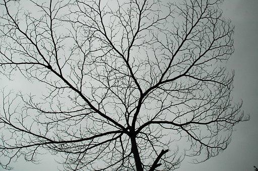 To Heaven, Stretch, Aesthetic Feeling, Deadwood
