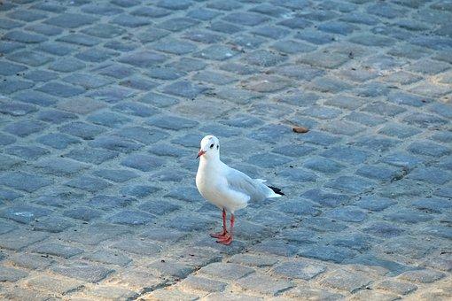 Gull, Water Bird, Bird, Flying, Animal, Animal World