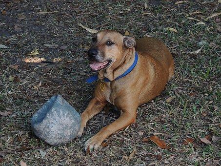 Dog, Pet, Animal, Canine, Happy, Mammal, Nature, Friend