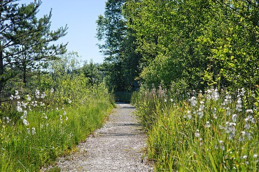 Away, Nature, Green, Trail, Forest Path, Nature Trail