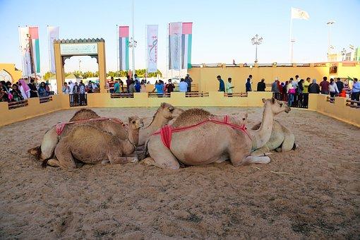 Camel, Global Village, Background