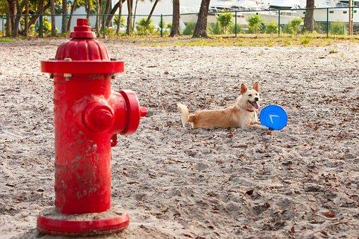 Dog, Park, Frisbee, Sand, Fire Hydrant, Outdoors, Doggy