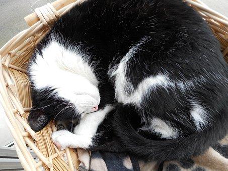 Cat, Malai, Dog's Bed, Basket, Pet, Sleep