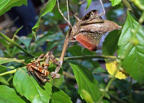 Praying Mantis, Paper Wasp, Duel
