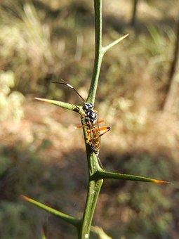 Wasp, Insect, Bug, Fauna, Nature