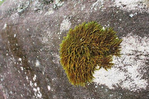 Green, Mosses, Rocks, Grey, Gray, Hard, Solid, Surfaces