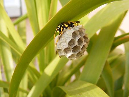 Bee, Nest, Insect, Home, Hexagon, Family, Animal