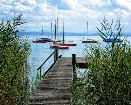 Web, Boardwalk, Water, Nature, Lake, Jetty, Boats, Reed