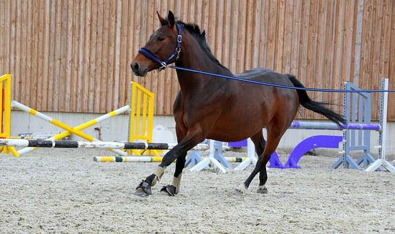 Horse, Dark Brown, Lunging, Lunge, Training, Clay Court