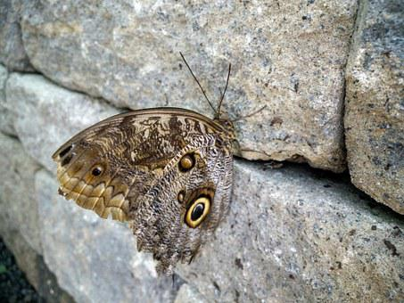 Butterfly, Stone, Nature, Natural, Rock, Grey, Pebble