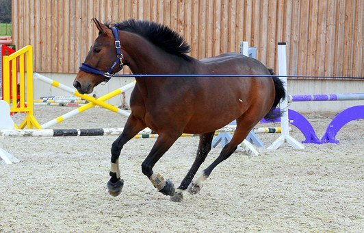 Horse, Dark Brown, Lunging, Lunge, Training, Clay Court