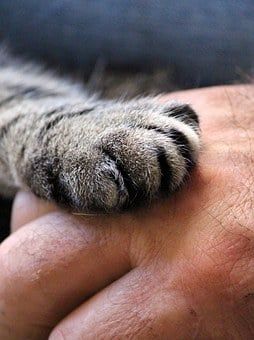 Cat's Paw, Hand, Cat, Human, Trust, Hand Giving, Close