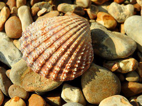 Shell, Pebbles, Beach, Nature, Stones, Cockle