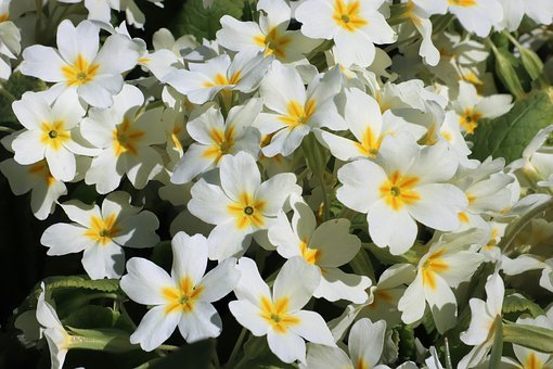 Flowers, White, Spring, Bloom, Garden, Flower, Summer