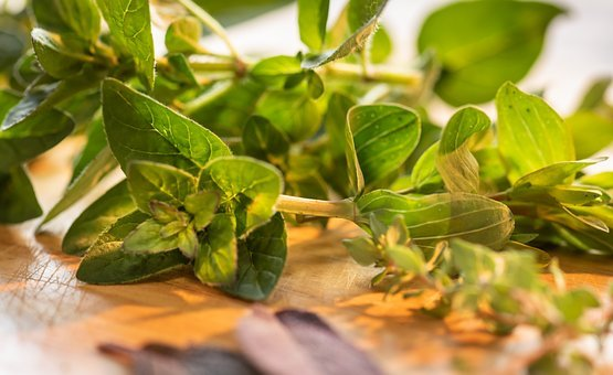 Culinary Herbs, Close-up, Marjoram, Thyme, Sage