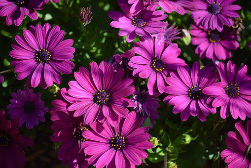 Easter Sunday, Earth Hour, Spring, Purple Flowers