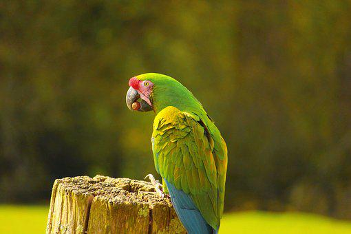 Birds, Parrot, Color, Animals, Colorful, Exotic