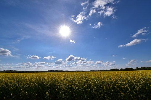 Field Of Rapeseeds, Sky, Sun, Landscape, Blue Yellow