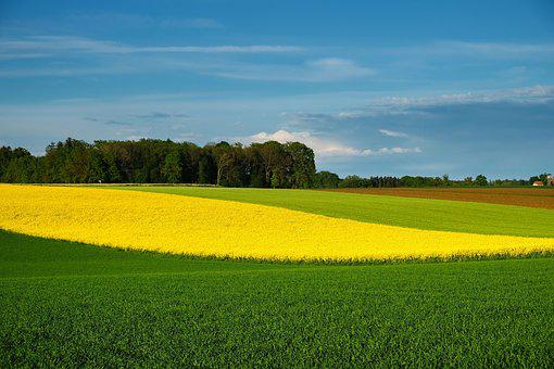 Nature, Landscape, Spring, Bloom, Fields, Color