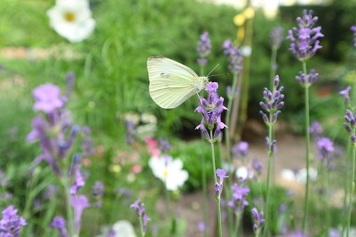 Spring, Summer, Nature, Flowers, Butterfly, The Sun