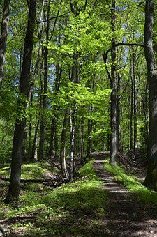 Forest, Forest Path, Away, Nature, Trees, Spring, Sunny