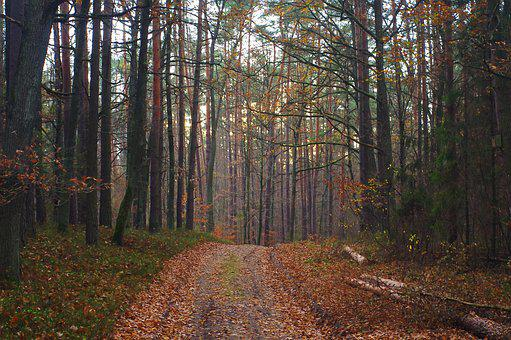 Forest, Way, Foliage, Landscape, Tree, The Path, Nature