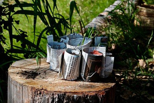 Permaculture, Seedling, Seeds, Newspaper, Green, Spring