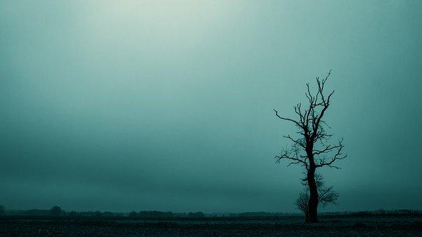 Tree, Dreary, Dark, Landscape, Atmosphere, Mood