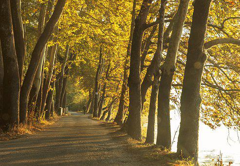 Trees, Road, Landscape, Forest, Nature, Path, Outdoors