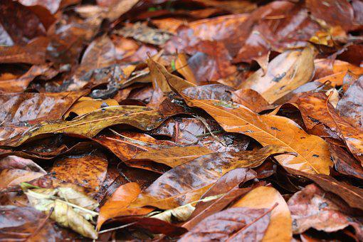 Leaves, Yellow, Wet, Background, Desktop, Color, Nature