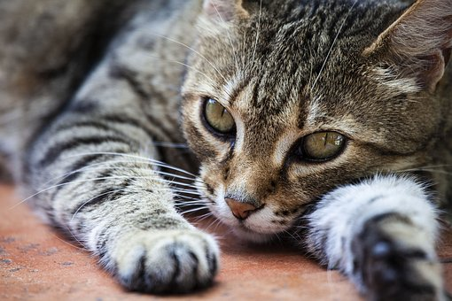 Cat, Feline, Animal, Nature, Mammal, Cute, Kitty, Lion