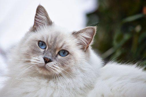 Cat, Feline, Nature, Mammal, Animal, Lion, Kitty
