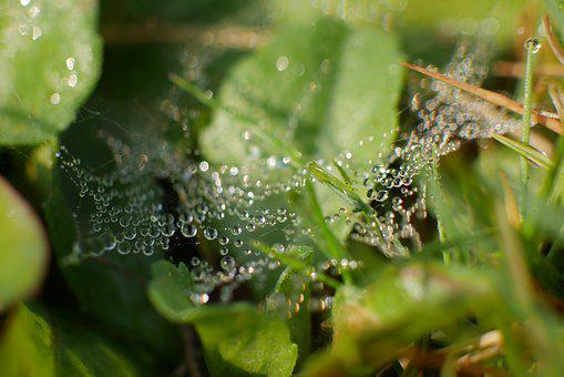 Dew, Grass, Meadow, Nature, Drop Of Water, Plant