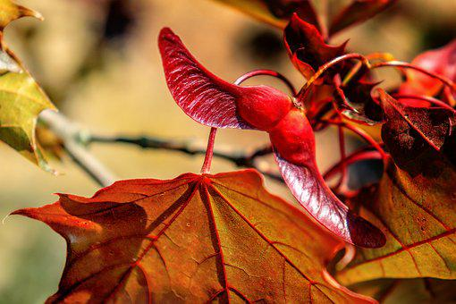 Brown, Nature, Autumn, Leaf, Leaves, Red, Plant, Tree