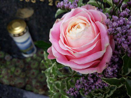 Cemetery, Mourning, Candle, Rose, Flower, Mother's Day