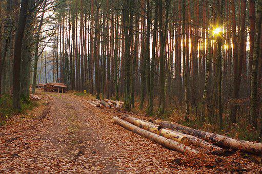 Forest, The Sun, Nature, Landscape, Tree, Light, Summer