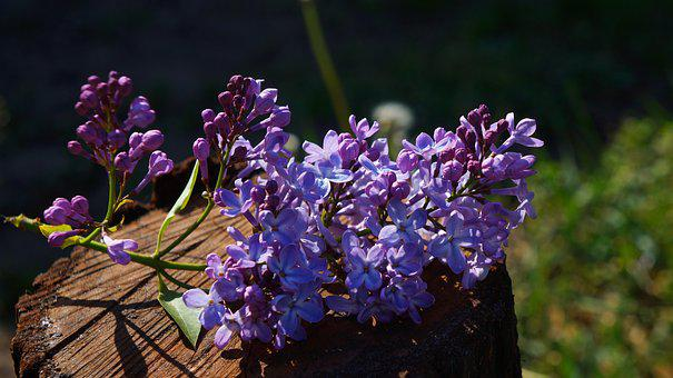 Nature, Plants, Violet, Flowers, Spring, Sprig, Trunk