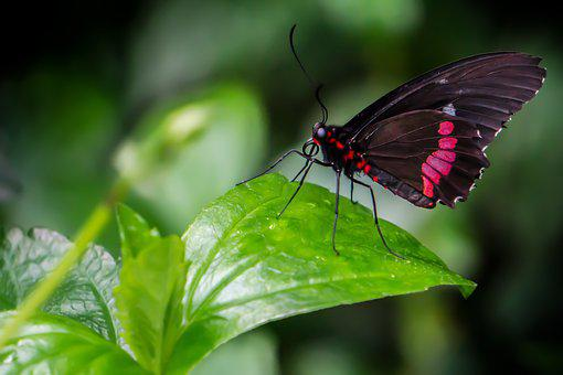 Butterfly, Plant, Green, Pink, Red, Black, Nature
