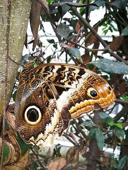 Butterfly, Tropical, Eye, Waldeule, Insect, Wing