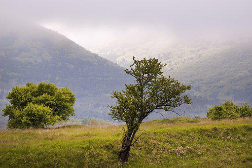 Spring, Fog, Clouds, Soft Light, Grass, Lone Tree