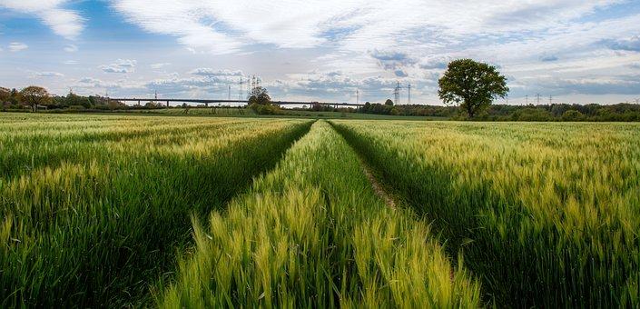 Rade, Rader High Bridge, Cornfield, Field, Cereals