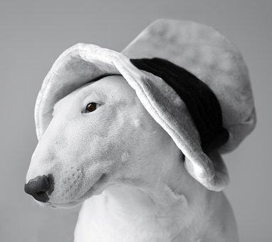 English Bull Terrier, White, Dog, Animal, Pet, Portrait