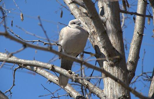 Dove, Bird, Branch, Blue Sky, Rest, Small Bird