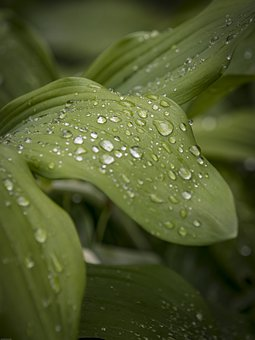 Leaf, Drip, Nature, Water, Rain, Plant, Green, Raindrop