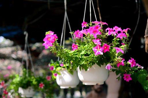 Beautiful, Flower, Garden, Gardens, Display Gardens