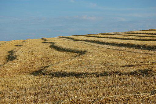 Field, Grain, Nature, Agriculture, Wheat, Crop, Harvest